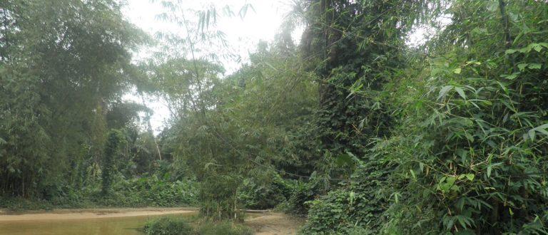 Article : Ebimpé, commune d'Anyama Côte D'Ivoire