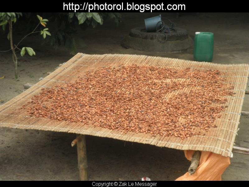 Cacao de Côte D'Ivoire