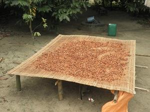 Cacao Ebimpé